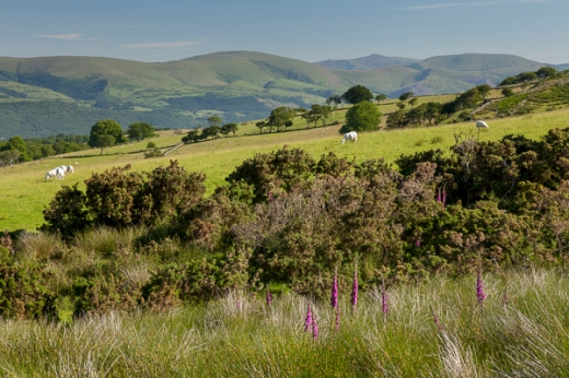 What little colour I could find above the Dyfi Valley.