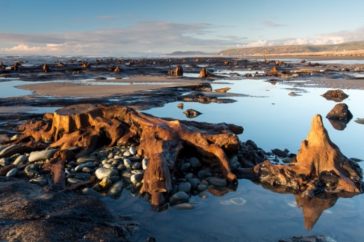 Submerged forest with tree stump - Borth/Ynyslas