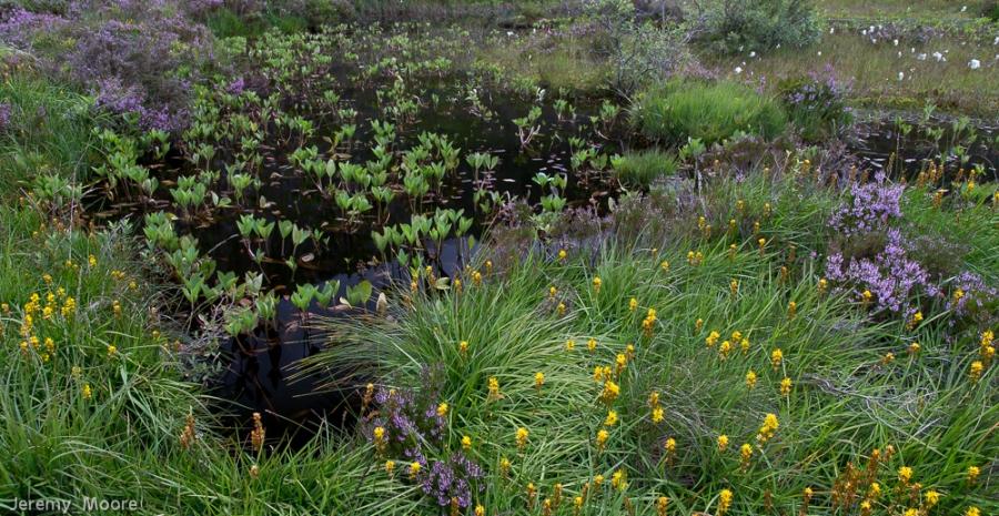 Bog pool, Cwm idwal